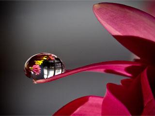 фруктовый напиток 5 букв сканворд - фото 2