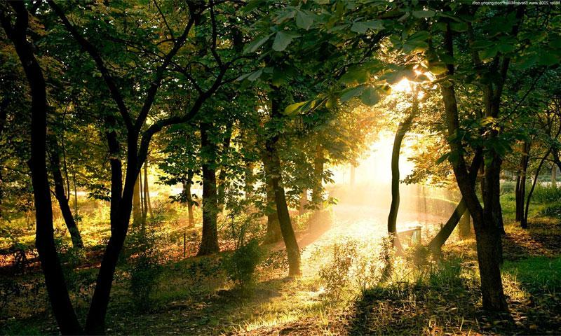 рассвет фото в лесу