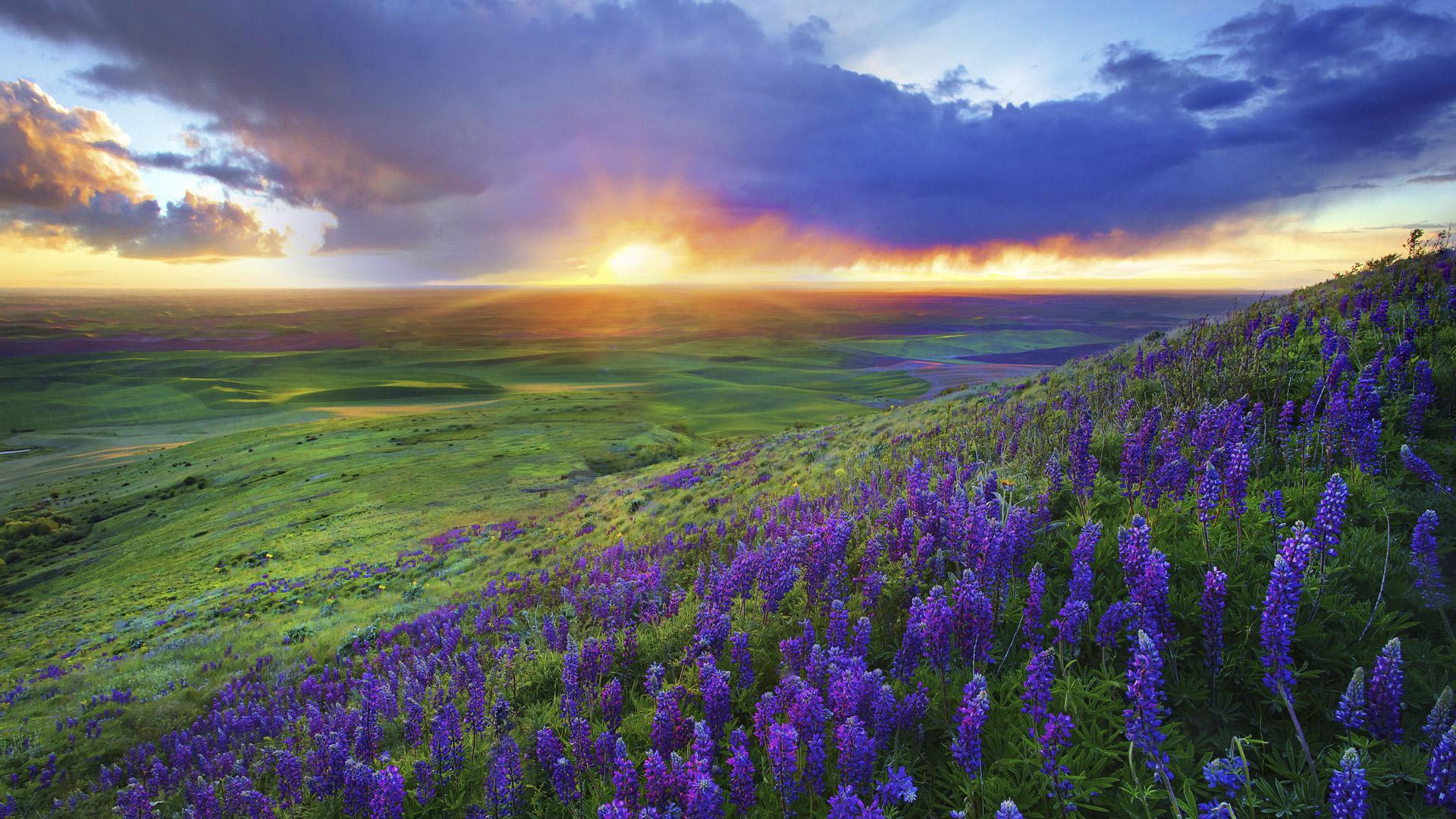 Природа фото релакс